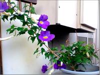 20100624flower